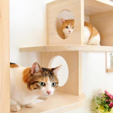 猫ちゃんたちは穴をくぐったり、箱のなかで休んだり・・・