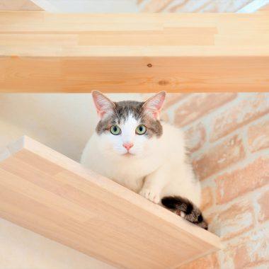 高いところが好きな猫ちゃんは家族を見張ってる?