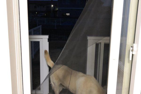 犬と暮らす家・・・網戸